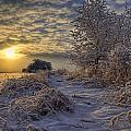 Hoar Frost Covered Trees At Sunrise by Dan Jurak