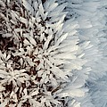 Hoar Frost Crystals On A Rock by Duncan Shaw