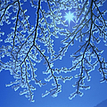 Hoar Frost by Hermann Eisenbeiss and Photo Researchers