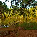 Hobcaw Barony Pond by Bill Barber