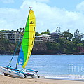 Hobie Cat by Mary Deal