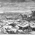 Hog Driving, 1868 by Granger