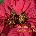Holiday Greeting Card by Linda Phelps