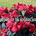 Holiday Greetings With Poinsettias by Linda Phelps