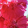 Hollyhock Duet by Susan Herber