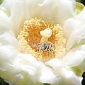 Honey Bee In Cactus by Brenda Deem