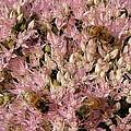 Honey Bees At Work by Kim Galluzzo Wozniak