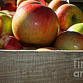 Honey Crisp by Susan Herber