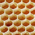 Honey In Wax Honeycomb Cells by Cordelia Molloy