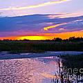 Honeymoon Island Sunset by Stephen Whalen