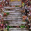 Honolulu Zoo Signs by Mary Deal
