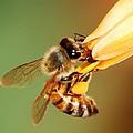 Hooked Bee by Meeli Sonn