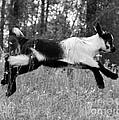 Hop Skip Jump by Christean Ramage