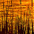 Horicon Cattail Marsh Wisconsin by Steve Gadomski