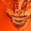 Horny Toad by Carmen Cuevas de Marquez