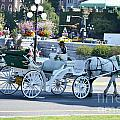 Horse And Buggy by Traci Cottingham