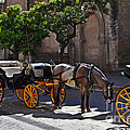 Horse And Carriage by Mary Machare