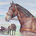 Horse And Cart by Gail Dolphin