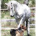 Horse And Dog Play by Vicki Podesta
