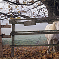 Horse At Fence by Jim Corwin and Photo Researchers