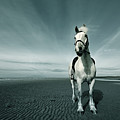 Horse At Irvine Beach by Mikeimages