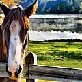 Horse At Lake Leroy by Lynne Jenkins