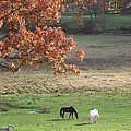 Horse Barn Hill Pasture by Michelle Welles