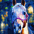 Horse Beautiful by Kathy Clark