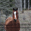 Horse Behind The Fence by Ericamaxine Price