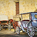 Horse Drawn Carriages In Guadalajara by Elena Elisseeva