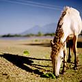 Horse by Edward Lim