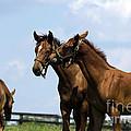 Horse Foul Play Vi by Terri Winkler