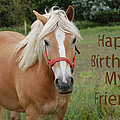 Horse Friend Birthday by Aimee L Maher ALM GALLERY