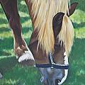 Horse Grazing by Judy  Hilton