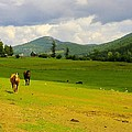Horse Heaven by John Greaves
