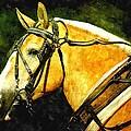 Horse In Paint by Amanda Struz