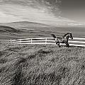 Horse In Pasture by Dana Edmunds - Printscapes
