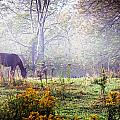 Horse In The Mist by Alan Norsworthy