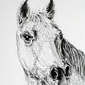 Horse by Janis Hobbs
