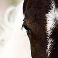 Horse Mare Saskatchewan Field by Mark Duffy