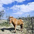 Horse by Mats Silvan