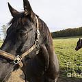 Horse by Matthias Hauser