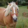 Horse Miss You by Aimee L Maher ALM GALLERY