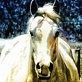 Horse Sense by Bill Cannon
