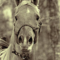 Horse Stare by Kathy Clark