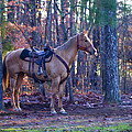 Horse Waiting For Rider by Kathy Clark