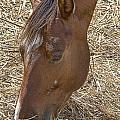 Horse With No Name by Douglas Barnard