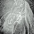 Horse by Rocky Malhotra