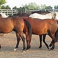 Horses-31 by Todd Sherlock