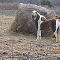 Horses by Amy Hosp